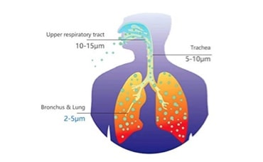 An Experimental Method to Clear the Lungs of Pathogens